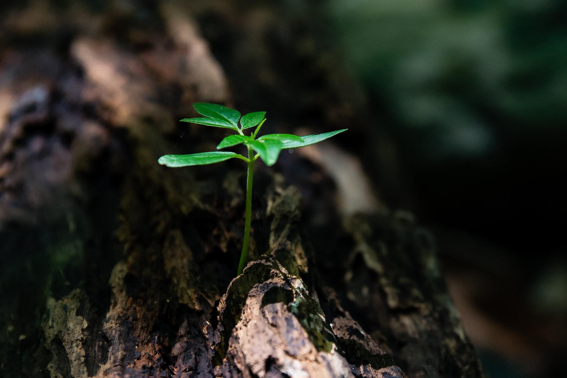 6 clés pour développer sa résilience en période de crise